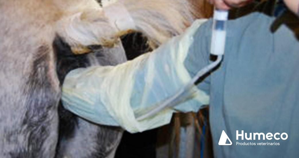como limpiar el utero de una yegua