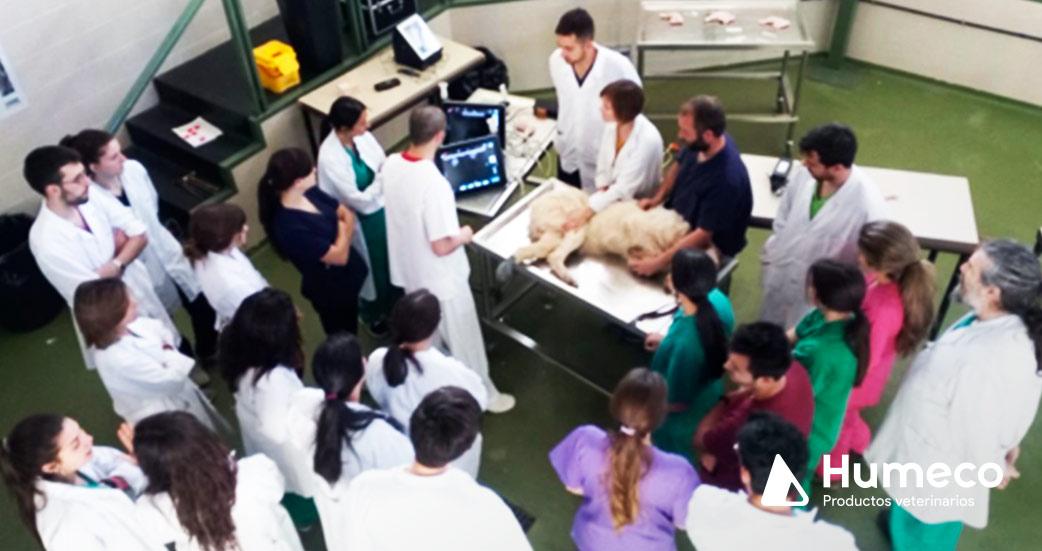 curso facultad veterinaria leon tecnica epi