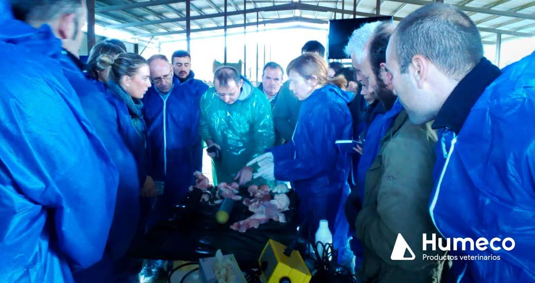 formacion veterinaria reproduccion del toro humeco